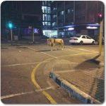 熊本の大地震によるライオンの逃走はデマ!本当の場所と元ネタは?